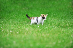 Motley cat. Playing on green grass Stock Photo