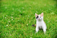 Motley cat. Playing on green grass Stock Photography