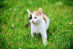 Motley cat. Playing on green grass Royalty Free Stock Photos