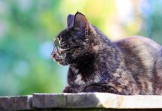 Portrait of a cat resting outdoors Royalty Free Stock Photography