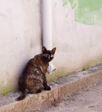 Motley cat. Sitting by the wall Royalty Free Stock Photos