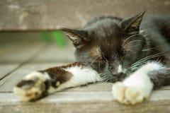 Motley cat Royalty Free Stock Photography