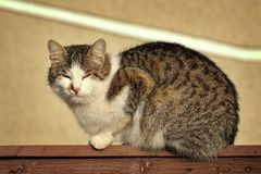 Domestic cat standing on wooden fence. Motley domestic cat standing on wooden fence Royalty Free Stock Images