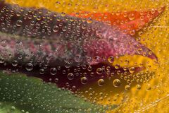 Motley drops of water fall down on red, green and  orange fallen leaves against the yellow background.