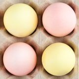 Motley eggs are in the cardboard box Stock Images