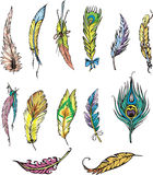 Motley feathers Royalty Free Stock Images