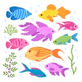 Motley fish in the sea. Royalty Free Stock Image