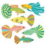 Motley fish. Royalty Free Stock Photography