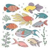 Motley fish. Stock Image
