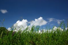 Motley grass and sky. Background Stock Photo