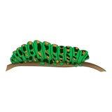 Motley green caterpillar creeps along the branch. Vector illustration. Drawing by hand. Stock Photos