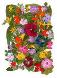 Motley multicolored applique clearing of dried pressed flowers Royalty Free Stock Image