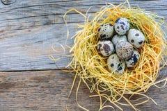 Motley quail eggs in the nest. Stock Image