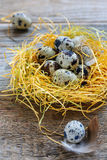 Motley quail eggs in the nest and small feathers. Stock Images