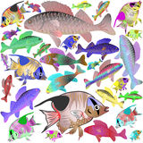 Motley sea fishes Royalty Free Stock Photography