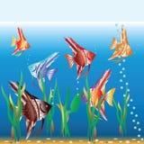 Motley small fishes swim in an aquarium. Vector illustration vector illustration