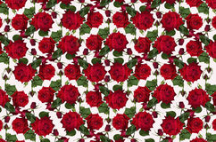 Motley white background with red roses and buds Stock Photography