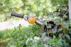 Moto arrêtée dans la jungle couverte par des feuilles d'usine s'élevante Photographie stock