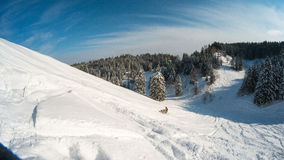 Moto de nieve móvil en bosque del invierno en las montañas Fotografía de archivo libre de regalías