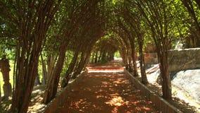 Moto del primo piano tramite il tunnel decorativo dell'albero sviluppato specialmente stock footage