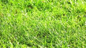 Moto dell'erba verde video d archivio