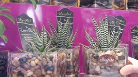 Moto della pianta d'acquisto della zebra della gente sullo scaffale del fiore dell'esposizione archivi video
