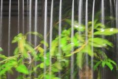 Moto della pioggia dell'acqua dal tetto alla notte Immagine Stock Libera da Diritti