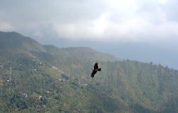 Moto di Eagle catturato sulle colline Immagine Stock