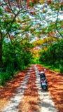 Motocicleta en bosque fotografía de archivo libre de regalías