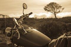 Motocicleta y árbol Imágenes de archivo libres de regalías