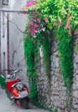 Motocicletas y remiendos rojos de vides verdes, de flores y de hojas verdes foto de archivo libre de regalías