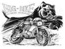 Motociclista che guida grande bici ed il colpo nero d della matita della pantera o della tigre Immagini Stock