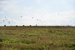 Motociclista con gli uccelli di volo Fotografia Stock Libera da Diritti