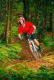 Motociclista da montanha que monta abaixo de Forest Trail Fotos de Stock