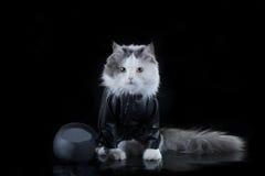 Motociclista do gato Fotografia de Stock