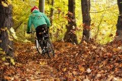 Motociclista Forest Downhill Autumn do Mountain bike Imagens de Stock