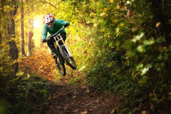 Motociclista Forest Downhill Autumn do Mountain bike imagem de stock royalty free
