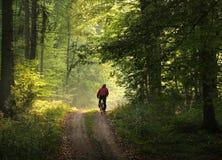 Motociclista in foresta Immagine Stock
