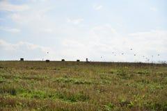 Motociclista sulla collina con la volata degli uccelli Immagini Stock