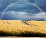 Motociclisti che attraversano i campi di frumento Fotografie Stock Libere da Diritti
