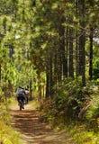 Motociclisti che ciclano nella foresta Immagine Stock