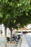 Motocycles under träden Fotografering för Bildbyråer