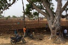 Motocykliści pod Banyan zdjęcie royalty free