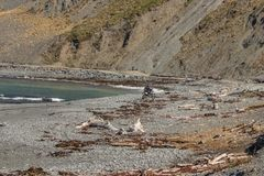 Motocyklu jeździec na plaży pod rewolucjonistek skał przejściem blisko Owhiro zatoki, Wellington obraz stock