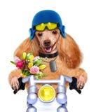 Motocyklu pies fotografia royalty free