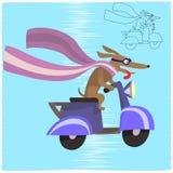 Motodog Royaltyfria Bilder