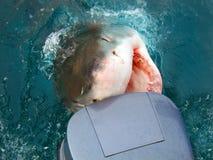 motorówkę atakiem rekina Obraz Stock