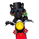 Motor bike good luck dog Stock Photography