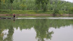 Motor boat is floating by river, rippling water, motor boat trace, summer, green trees stock video