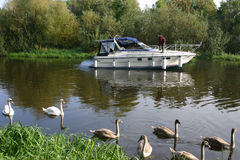 Motor boat on river. A white motor boat on a river, with swans in the foreground Stock Image